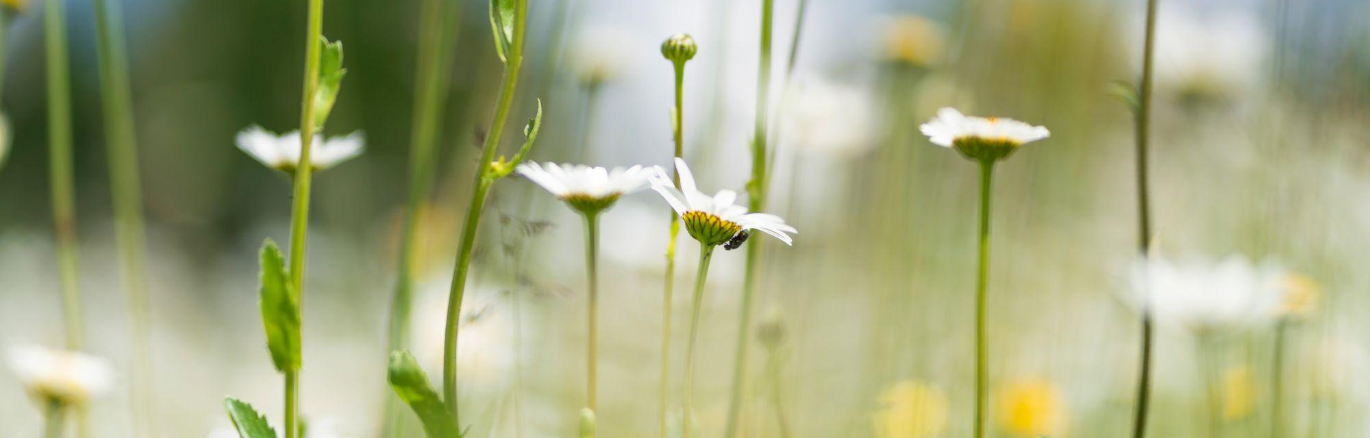 Landhaus Streklhof - Wir lieben die Natur